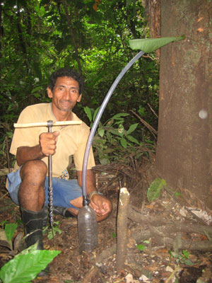 Drilling for copaíba oil