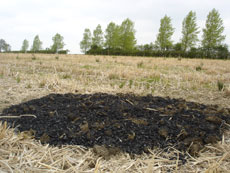 Charcoal added to a miscanthus field after harvesting