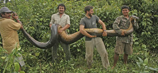 Scientists grappling with anaconda