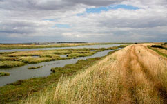 Salt marsh in Blackwater Estuary
