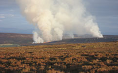 Peatland burning