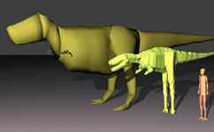 Size comparison between adult, juvenile and human