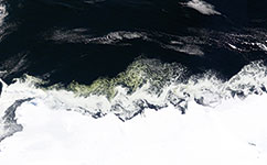 Algae coated ice off the Antarctic coast