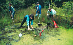 Volunteers clearing a pond