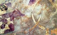 Rock art image of domesticated cattle