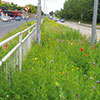 The goal - a wildflower-rich roadside verge in Rotherham